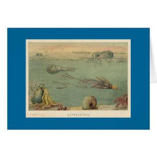 Cephalopoda Card