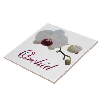 Ceramic Tile - Ruby-Lipped White Orchid