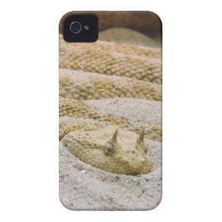Cerastes de cuernos sahariano del Cerastes de la iPhone 4 Case-Mate Carcasas