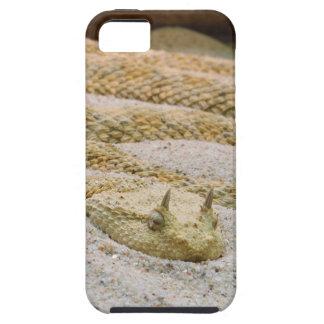 Cerastes de cuernos sahariano del Cerastes de la iPhone 5 Carcasas
