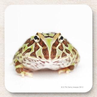 Ceratophrys Cranwelli, Cranwell's Horned Frog, Beverage Coaster