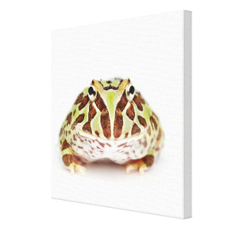 Ceratophrys Cranwelli, Cranwell's Horned Frog, Canvas Print