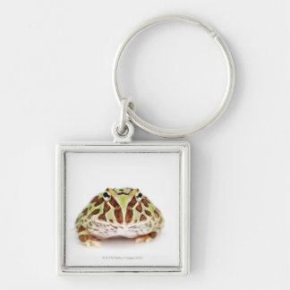 Ceratophrys Cranwelli, Cranwell's Horned Frog, Keychain