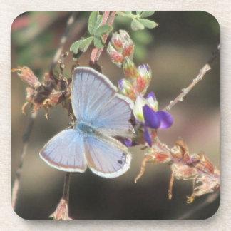 Ceraunus Blue Butterfly Coasters
