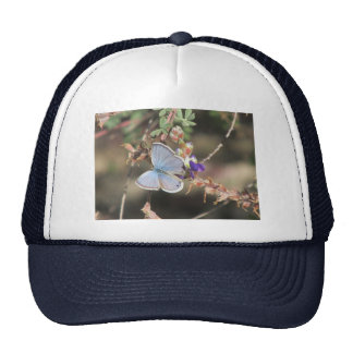 Ceraunus Blue Butterfly Trucker Hat