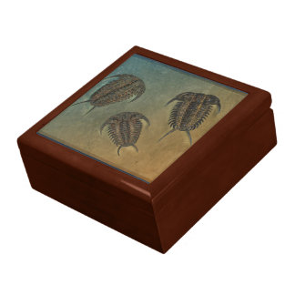 Ceraurus and Levicerurus Fossil Trilobite Gift Box