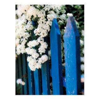 Cerca azul con las flores blancas postal