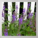 Cerca azul púrpura de la flor posters