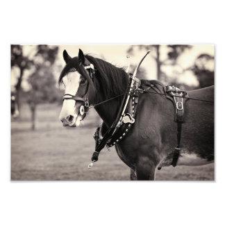 Cerca - caballo ido días de Clydesdale Fotografía