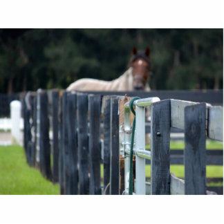 cerca con el caballo descolorado detrás esculturas fotograficas