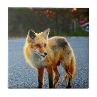 Cerca de la puesta del sol del Fox Azulejo Cuadrado Pequeño
