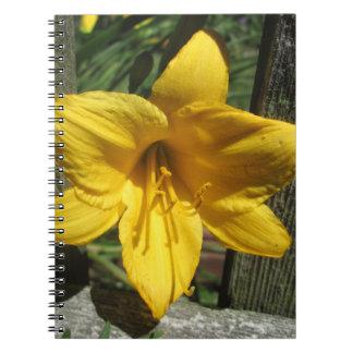 Cerca resistida amarillo del lirio libretas espirales