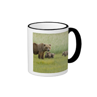 Cerda de Alaska y tres Cubs, Ursus del oso de Brow Tazas