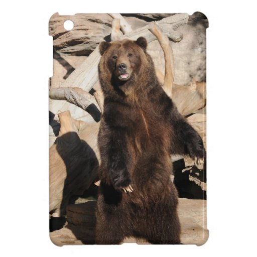 Cerda del oso grizzly