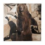 Cerda del oso grizzly azulejo ceramica