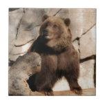 Cerda del oso grizzly azulejo cerámica