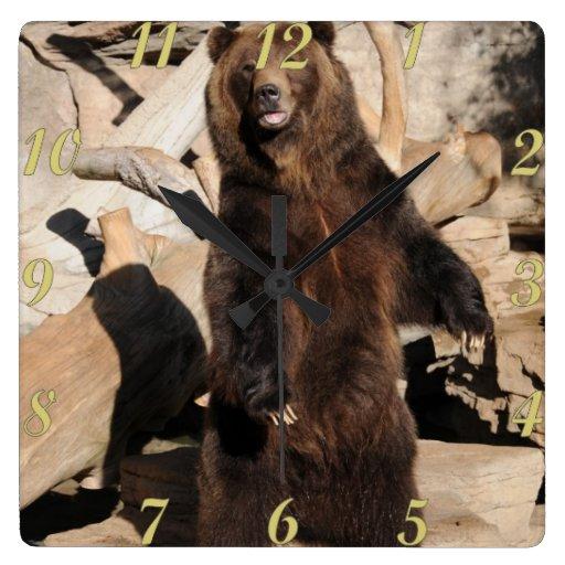 Cerda del oso grizzly relojes