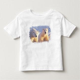 Cerda del oso polar con el cachorro en el hielo de camisas