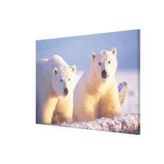 Cerda del oso polar con el cachorro en el hielo de impresiones en lona estiradas