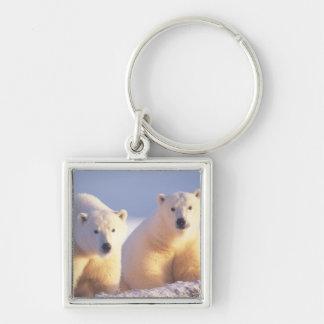 Cerda del oso polar con el cachorro en el hielo de llavero cuadrado plateado