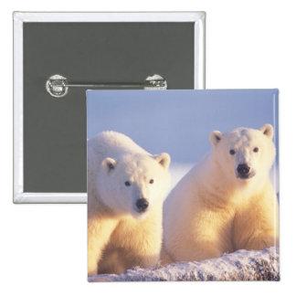 Cerda del oso polar con el cachorro en el hielo de pin cuadrada 5 cm