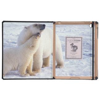 Cerda del oso polar con el cachorro, hielo de paqu