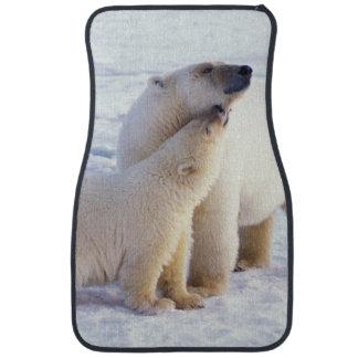 Cerda del oso polar con el cachorro, hielo de paqu alfombrilla de auto