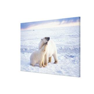 Cerda del oso polar con el cachorro hielo de paqu impresiones en lona