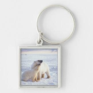 Cerda del oso polar con el cachorro, hielo de paqu llavero cuadrado plateado