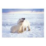 Cerda del oso polar con el cachorro, hielo de paqu fotografía