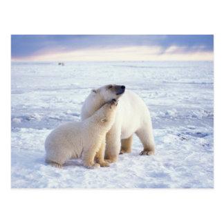 Cerda del oso polar con el cachorro, hielo de tarjeta postal