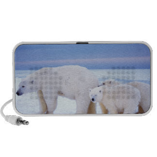 Cerda del oso polar con los cachorros en el hielo  laptop altavoces