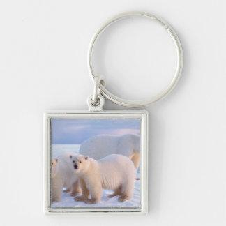Cerda del oso polar con los cachorros en el hielo  llavero cuadrado plateado