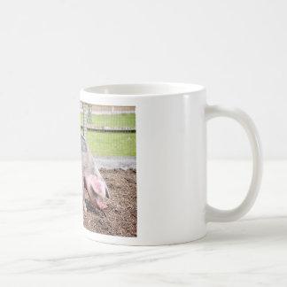 Cerda rosada y negra taza