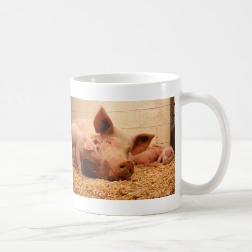 Cerda y cochinillos tazas de café