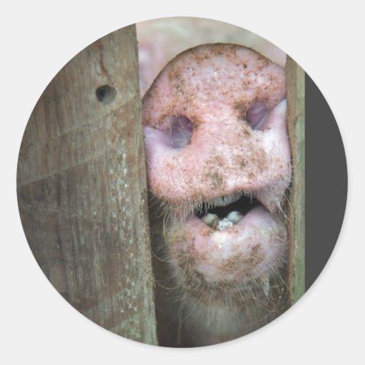 cerdo adentro etiquetas redondas
