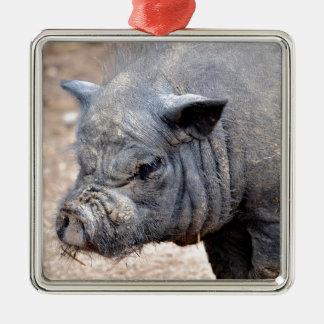 Cerdo barrigón vietnamita del retrato adorno navideño cuadrado de metal