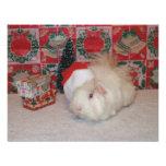 Cerdo blanco de Santa Anuncios