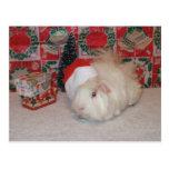 Cerdo blanco de Santa Postal