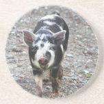 Cerdo blanco y negro del bebé posavasos diseño