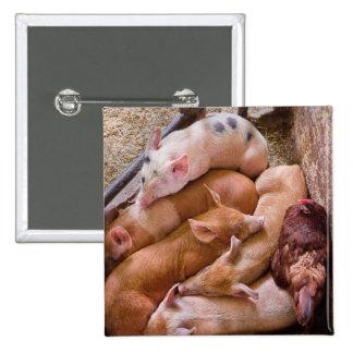 Cerdo - cinco pequeños piggies y un pollo pins