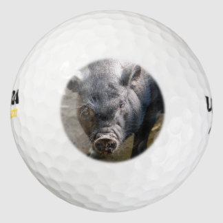 Cerdo de Borneo Pack De Pelotas De Golf
