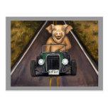Cerdo de camino postales