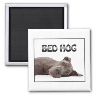 Cerdo de la cama de great dane imán cuadrado