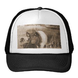 cerdo de los años 60 gorras