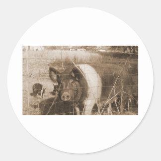 cerdo de los años 60 pegatina redonda