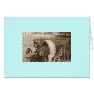 cerdo de los años 60 tarjeta de felicitación
