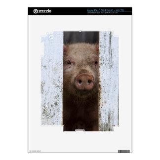 Cerdo de mirada lindo pero triste del bebé que iPad 3 pegatinas skins