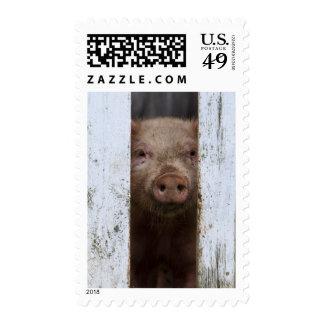 Cerdo de mirada lindo pero triste del bebé que sello postal