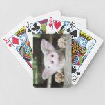 Cerdo del bebé en la pluma, cochinillo baraja de cartas